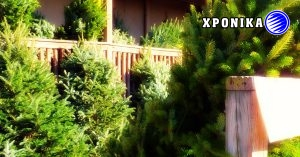 Έλλειψη φυσικών χριστουγεννιάτικων δέντρων στο Κεμπέκ