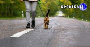 Οι γάτες δεν περιλαμβάνονται στην απαλλαγή της απαγόρευση της κυκλοφορίας του Κεμπέκ